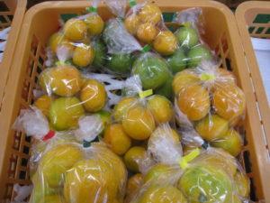 コスモス広場の取り扱い商品カテゴリ - みかん等の柑橘類