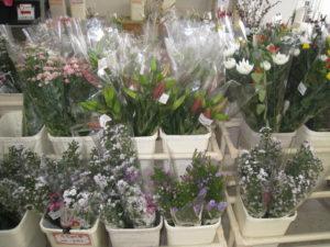コスモス広場の取り扱い商品カテゴリ - お花