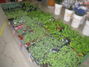 「野菜苗」の入荷も始まっています!!