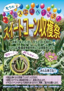 スイートコーン収穫祭開催!!-写真1